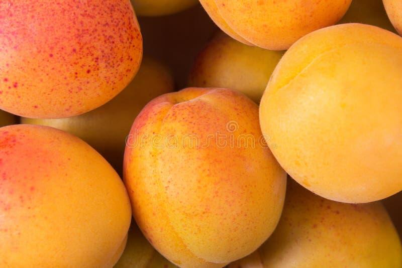 Fresh fruits of apricot. Ripe fruit fresh apricot, closeup photo stock photos