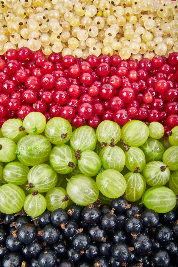 Fresh fruits background royalty free stock image