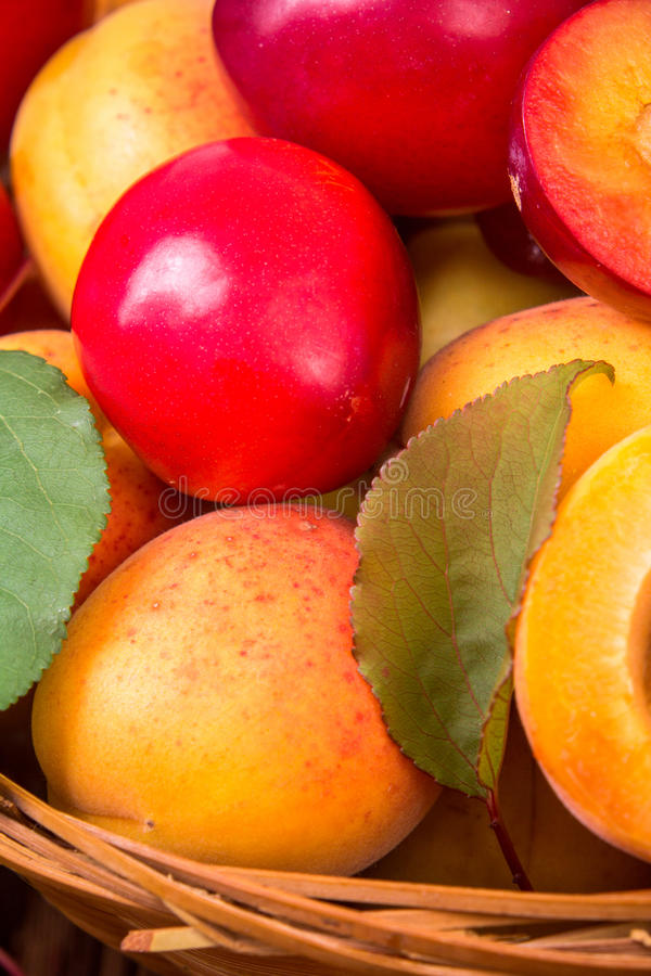 Fresh fruits in a basket. Whole and half peaches, plums and apricots in a basket stock photo