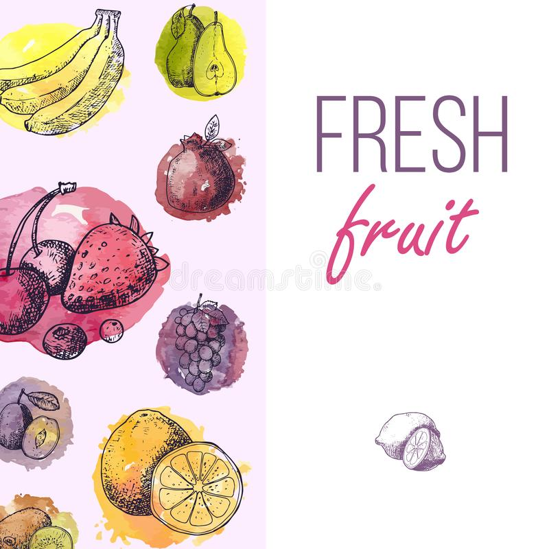Fresh fruits drawing menu template. Hand drawn vintage vector frame. Summer fruit set of berries, banana, pears, orange royalty free illustration