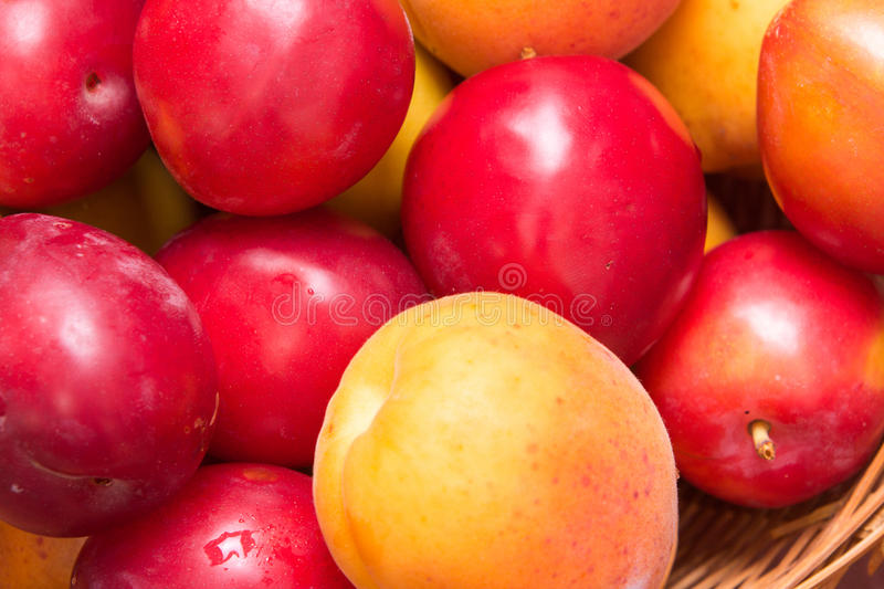 Fresh fruits of plums and apricots. Ripe fruit fresh apricot, closeup photo royalty free stock image