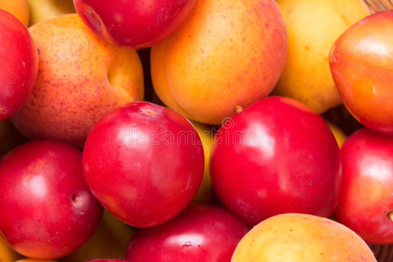 Fresh fruits of plums and apricots. Ripe fruit fresh apricot, closeup photo royalty free stock images