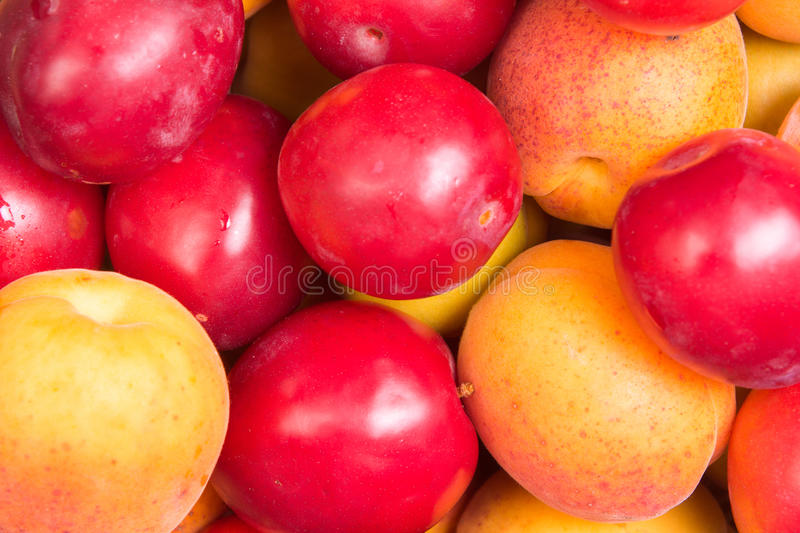 Fresh fruits of plums and apricots. Ripe fruit fresh apricot, closeup photo royalty free stock photos