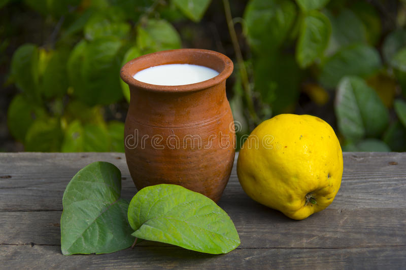 Quince and milk. Fresh fruits and milk, quince from garden, autumn harvest royalty free stock photos