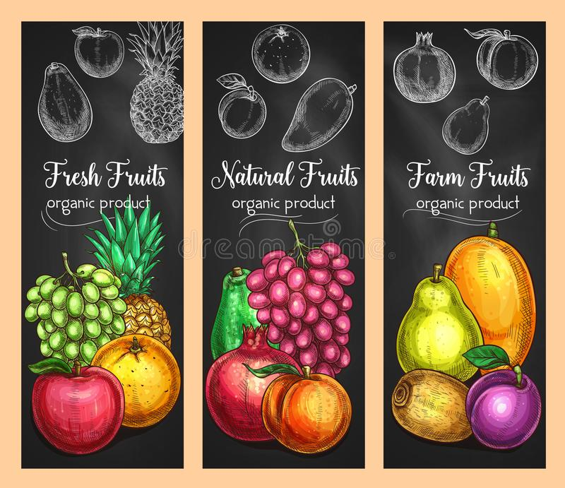 Vector sketch banners of fresh exotic fruits. Fresh fruits sketch banners of grape, apple or pear and orange, tropical pineapple or garnet and plum. . Vector royalty free illustration