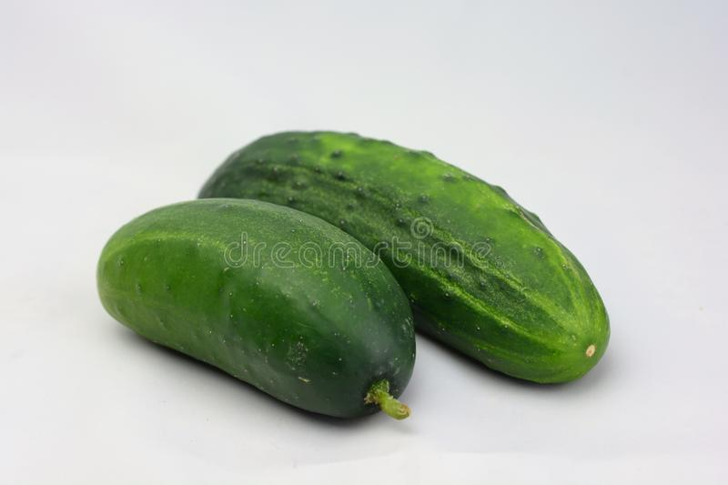 Fresh Garden Cucumber stock image