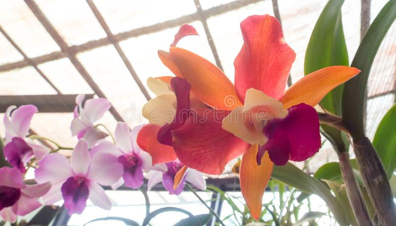 Fresh garden flowers from garden royalty free stock photo