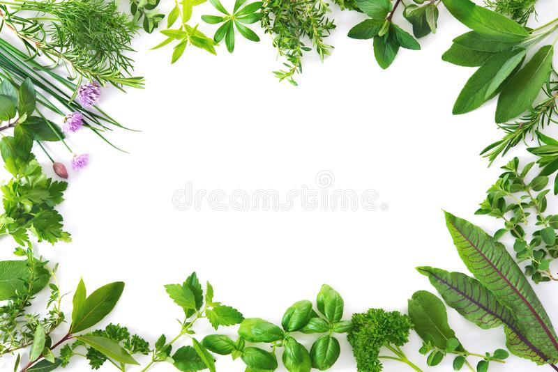 Fresh garden herbs isolated on white background stock photo
