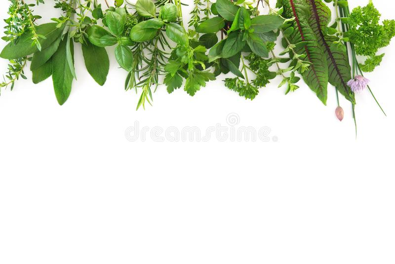 Fresh garden herbs isolated on white background royalty free stock photos
