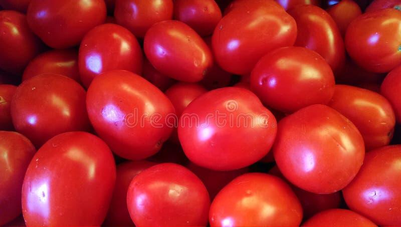 Fresh garden tomatoes stock images