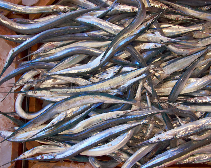 Fresh garfish (sea needle) for sale stock photo