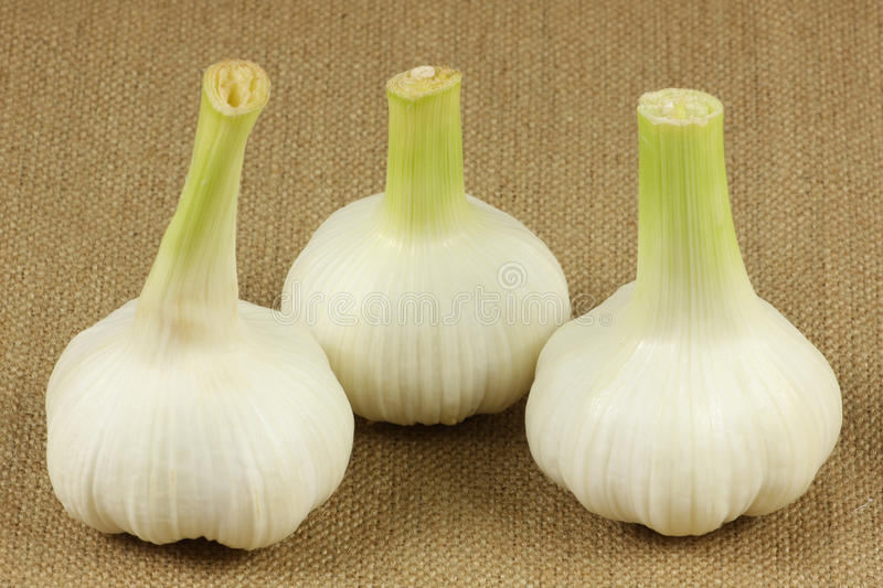 Download Fresh garlic stock image. Image of food, eating, stinking - 14606431