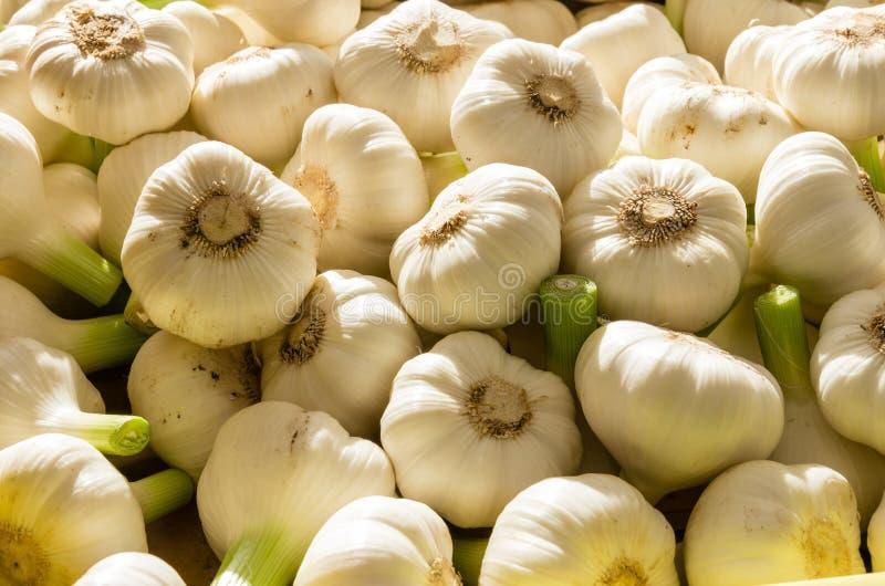 Fresh garlic cloves at the market stock photography