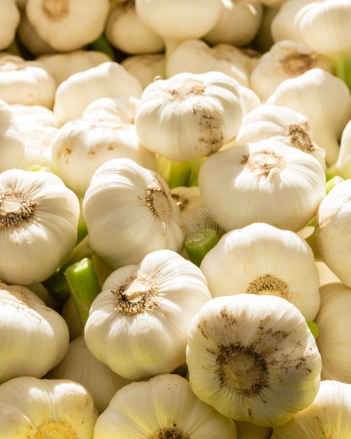 Fresh garlic cloves at the market royalty free stock photos