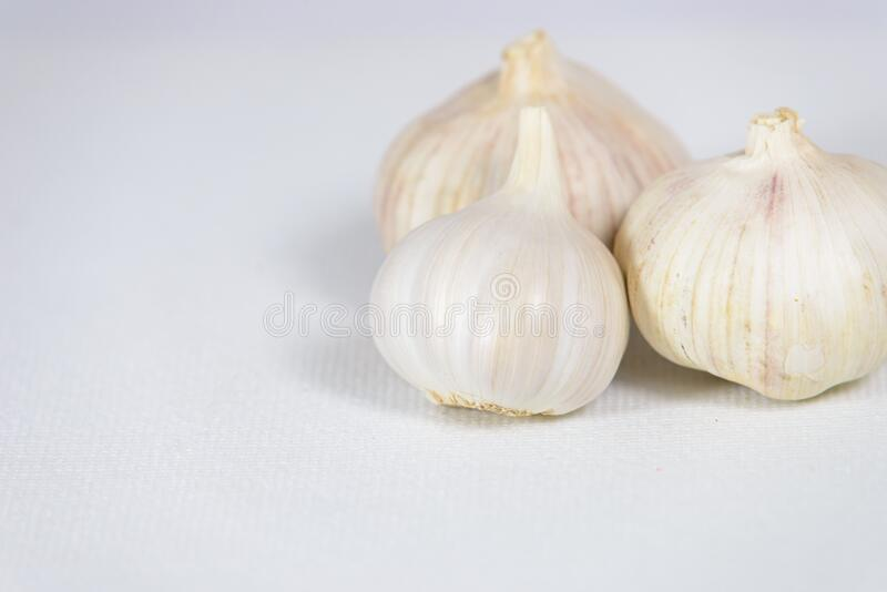 Fresh garlic head on white canvas background with copy space stock photos