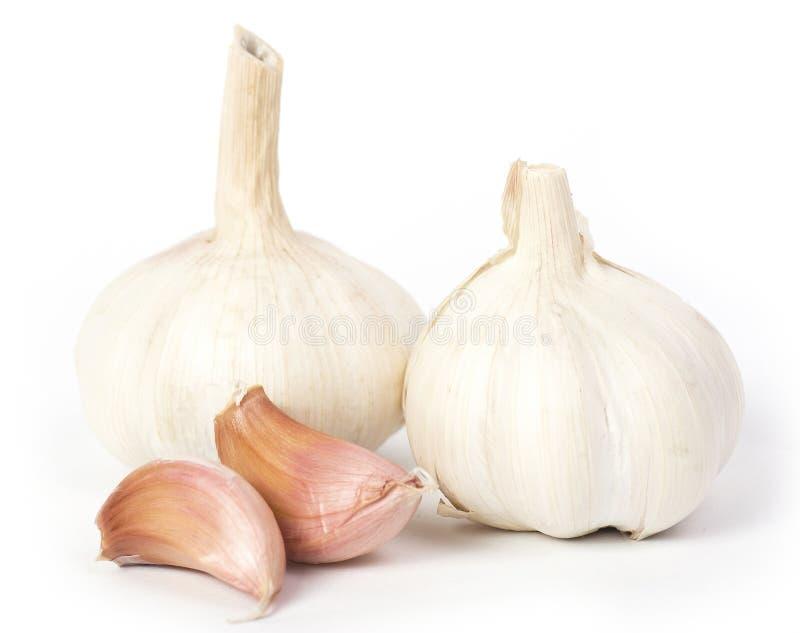 Fresh garlic isolated. On white background stock image
