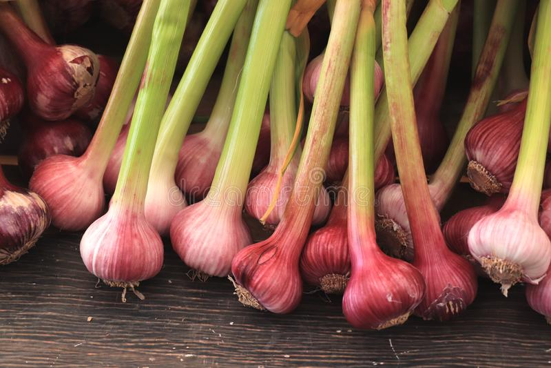 Fresh garlic on a market. Pile of fresh garlic on a vegetable market royalty free stock images