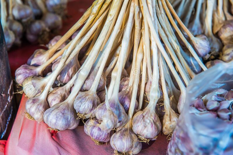 Fresh garlic on red cloth stock image. Image of stand