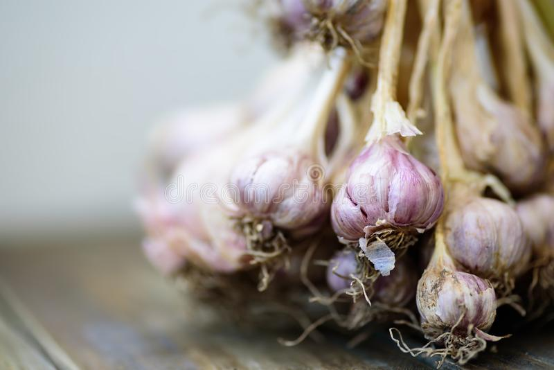 Fresh garlic on wooden, food ingredients. Herbs and spices royalty free stock photo