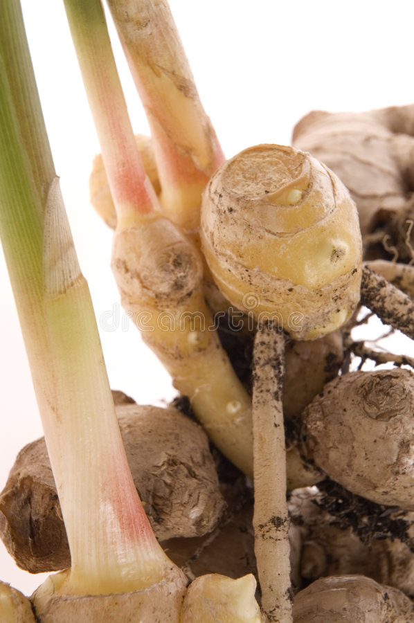Download Fresh Ginger Root. Plant Stock Photo - Image: 3961680