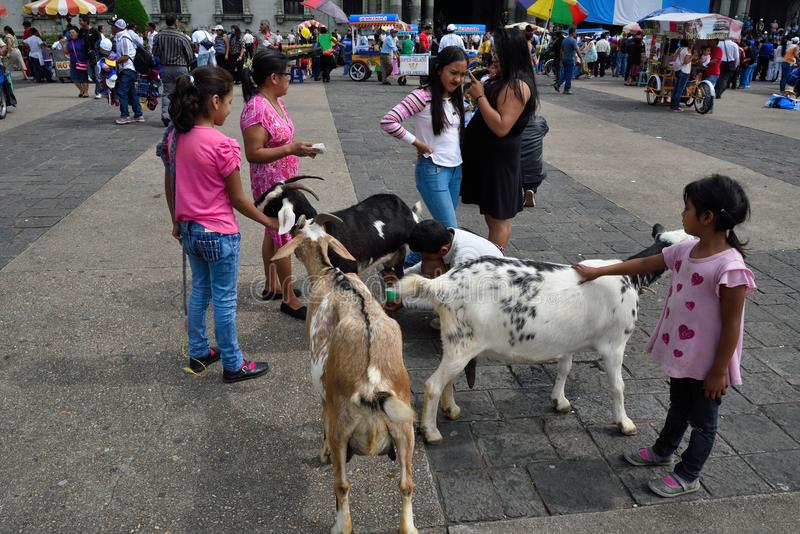 Fresh goat milk in center of the city. royalty free stock image