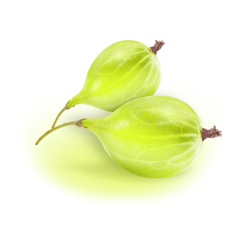 Fresh gooseberry isolated on white background with selection path stock images