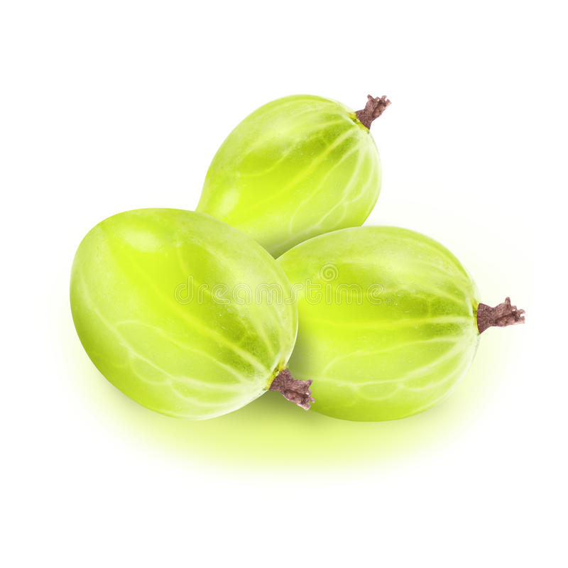 Fresh gooseberry isolated on white background with selection path. Closeup of green fresh gooseberry isolated on white background with selection path royalty free stock photos