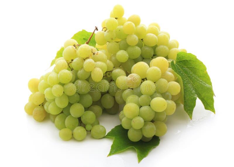 Fresh grape fruits i royalty free stock photography