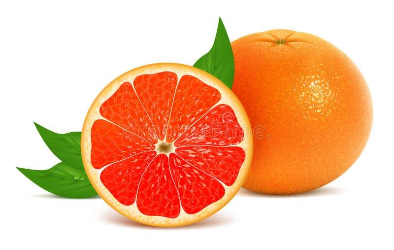 Download Fresh grapefruit stock vector. Illustration of ripe, citrus - 27404047