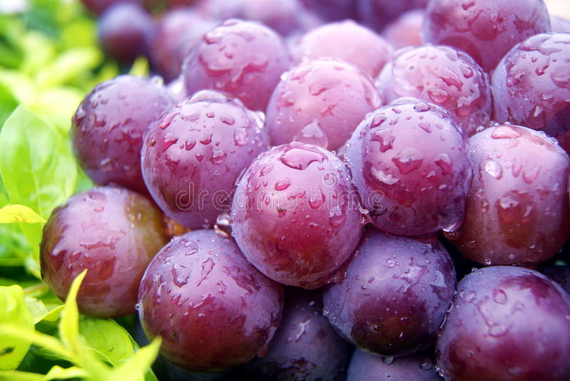 Download Fresh grapes stock photo. Image of fresh, up, products - 32552946
