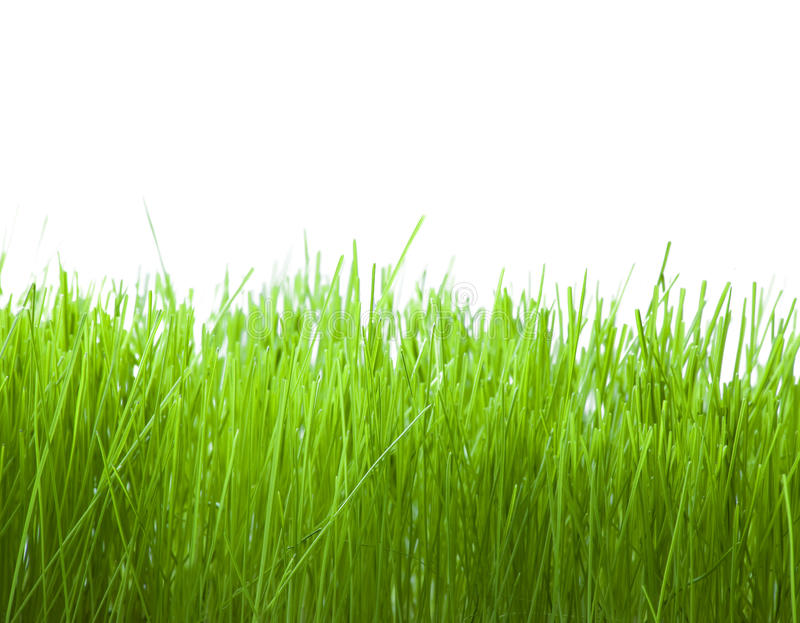 Download Fresh grass stock image. Image of nature, background - 13483221