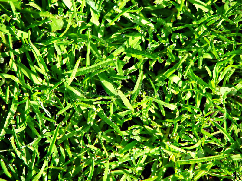 Download Fresh grass stock photo. Image of macro, early, green - 26276144
