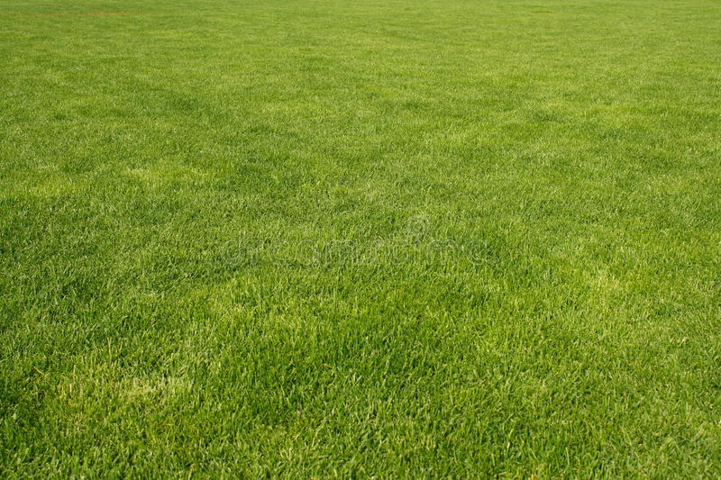 Download Fresh grass stock image. Image of meadow, blade, fresh - 26398455