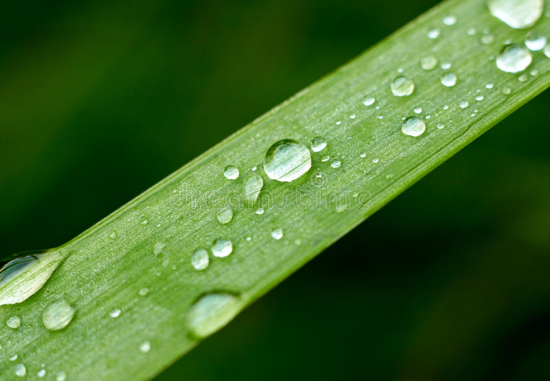 Fresh Grass With Dew Stock Images