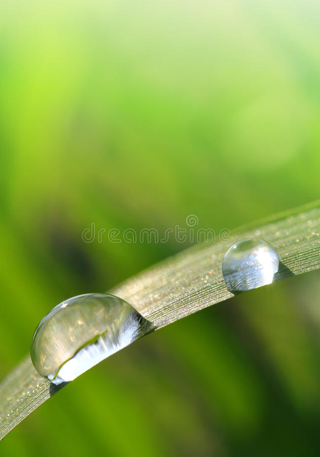 Fresh grass with dew drops stock image