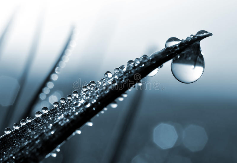 Download Fresh Grass With Dew Drops Stock Photography - Image: 25985372