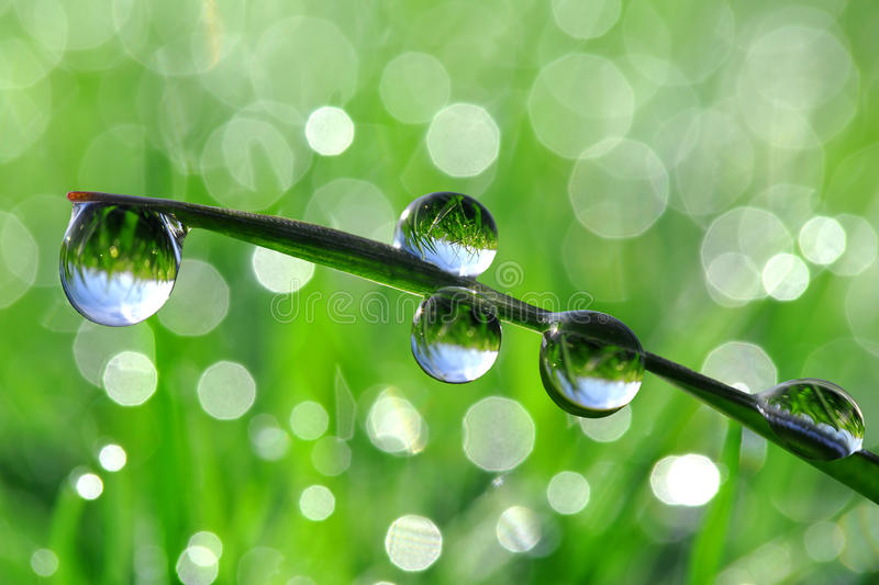 Download Fresh grass with dew drops stock image. Image of environmental - 27475141