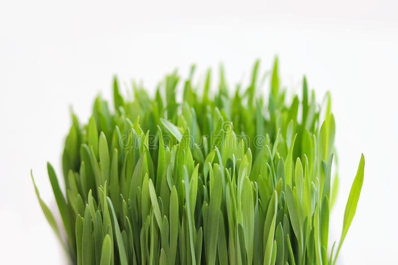 Fresh grass isolated on white background. Green border. Spring leaves. royalty free stock photography