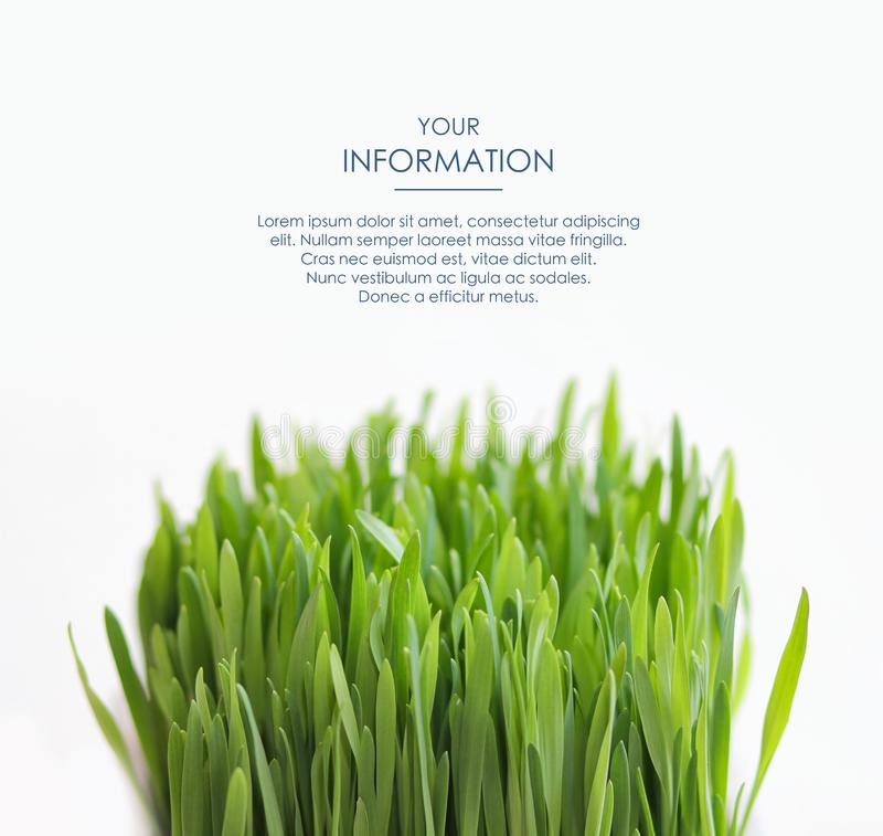 Fresh grass isolated on white background. Green border. Spring leaves. Web article template. Long header banner format. royalty free stock photo