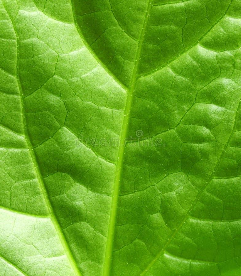 Fresh green royalty free stock photography