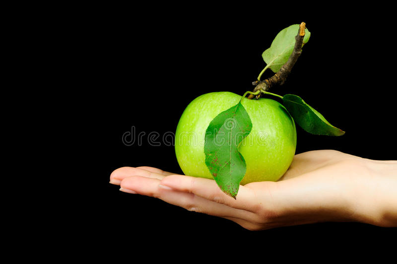 Download Fresh Green Apple stock photo. Image of isolated, fruit - 10666932