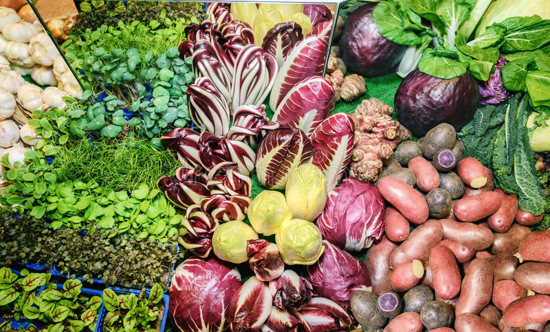 Fresh green aromatic herbs, roots, salad mangold, garlic, cabbage, onion, red cabbage, potatoes, chicory salad, radicchio salad, k. Fresh green aromatic herbs royalty free stock photo