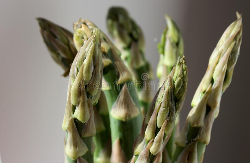 Fresh green asparagus spears closeup. Fresh green asparagus spears in closeup stock photography