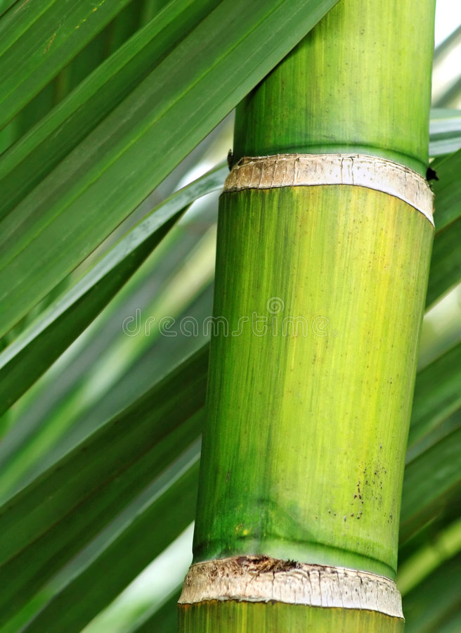 Download Fresh green bamboo stock image. Image of branch, decoration - 8201255