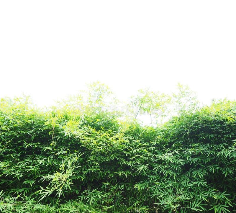 Bamboo leaves over white background. Fresh green bamboo leaves over white background royalty free stock photo