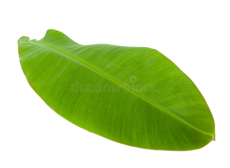 Fresh Green Banana Leaf. Isolated with Clipping Path 5 royalty free stock images
