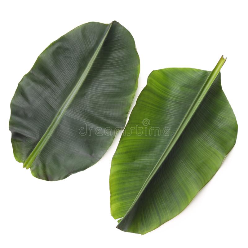 Fresh green banana leaves on white background, top view. royalty free stock photos