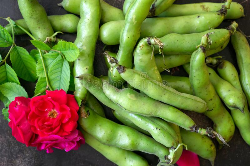 Fresh green beans of milky ripeness on the table stock images