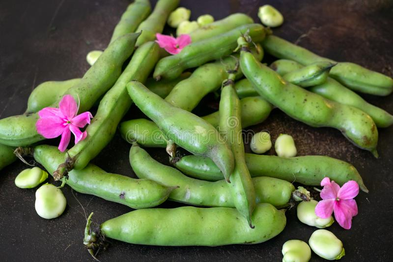 Fresh green beans of milky ripeness on the table royalty free stock photos