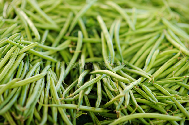 Fresh green beans. On Paris farmer agricultural market royalty free stock photography